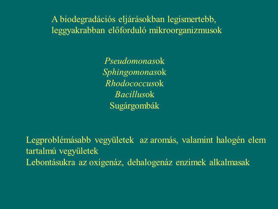 A biodegradációs eljárásokban legismertebb, leggyakrabban előforduló mikroorganizmusok Pseudomonasok Sphingomonasok Rhodococcusok Bacillusok Sugárgomb