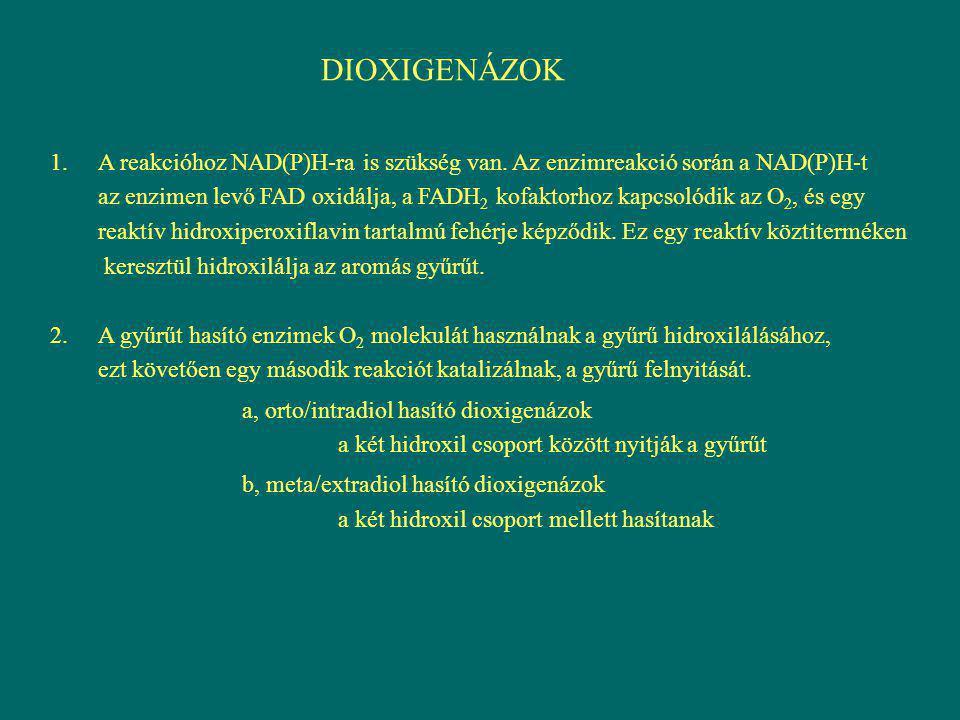 DIOXIGENÁZOK 1.A reakcióhoz NAD(P)H-ra is szükség van. Az enzimreakció során a NAD(P)H-t az enzimen levő FAD oxidálja, a FADH 2 kofaktorhoz kapcsolódi