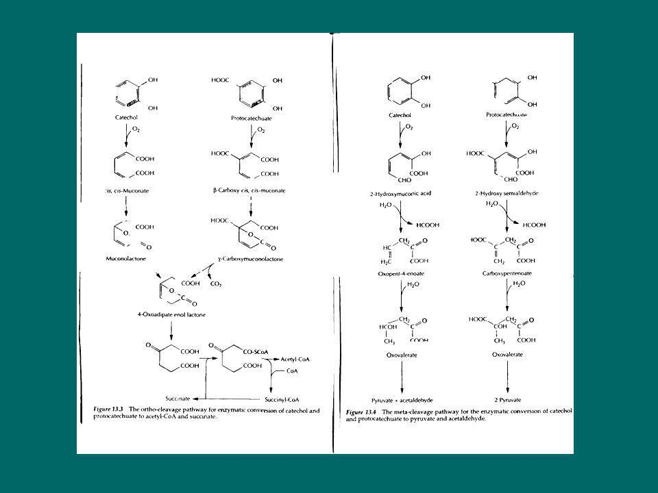 CAM plasmid OCT plasmidXYL plasmidNAH plasmid XYL plasmid NAH plasmid XYL plasmid NAH plasmid CAM/OCT plasmid Mating Plasmid recombination Mating Strain A Strain G Strain F Strain E Strain DStrain CStrain B