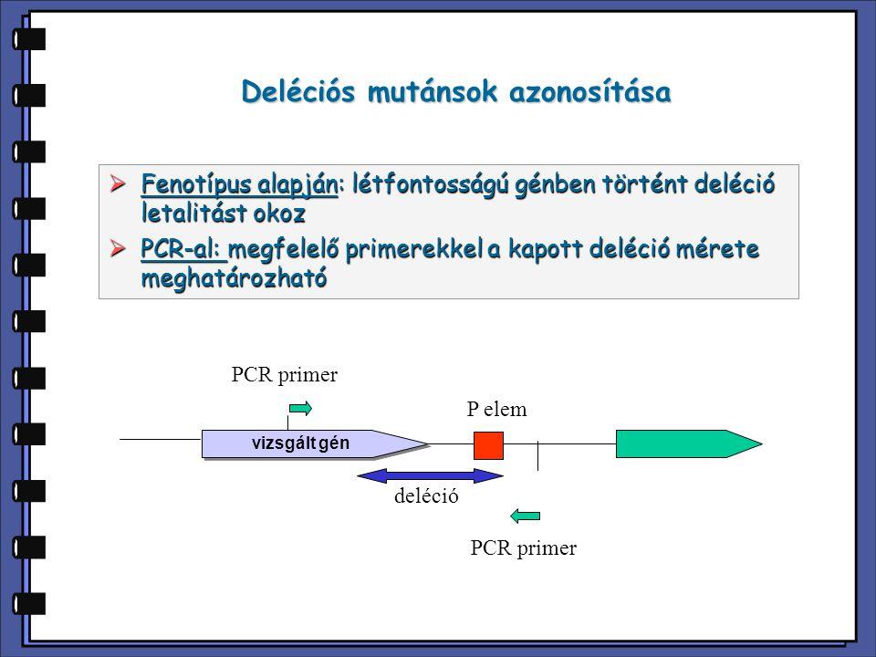 Deléciós mutánsok azonosítása  Fenotípus alapján: létfontosságú génben történt deléció letalitást okoz  PCR-al: megfelelő primerekkel a kapott deléc