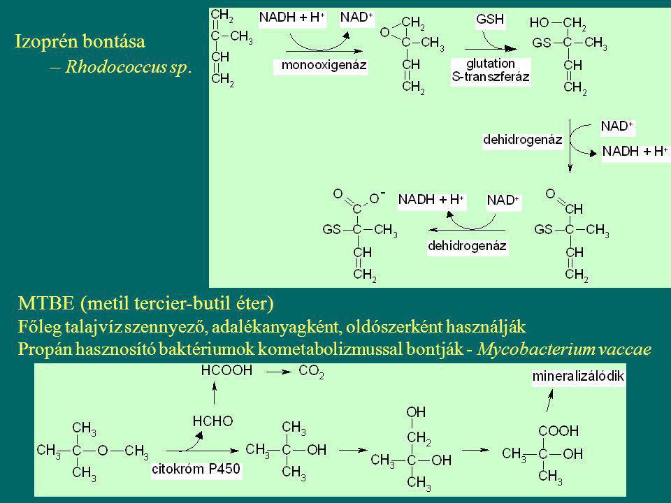 Izoprén bontása – Rhodococcus sp. MTBE (metil tercier-butil éter) Főleg talajvíz szennyező, adalékanyagként, oldószerként használják Propán hasznosító