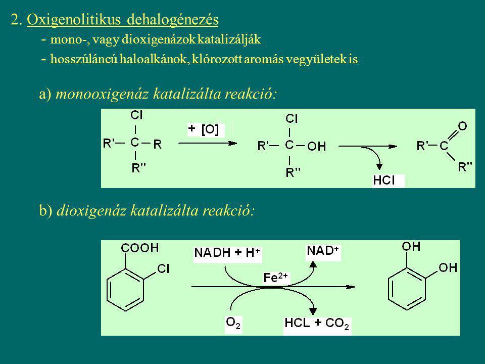2. Oxigenolitikus dehalogénezés - mono-, vagy dioxigenázok katalizálják - hosszúláncú haloalkánok, klórozott aromás vegyületek is a) monooxigenáz kata