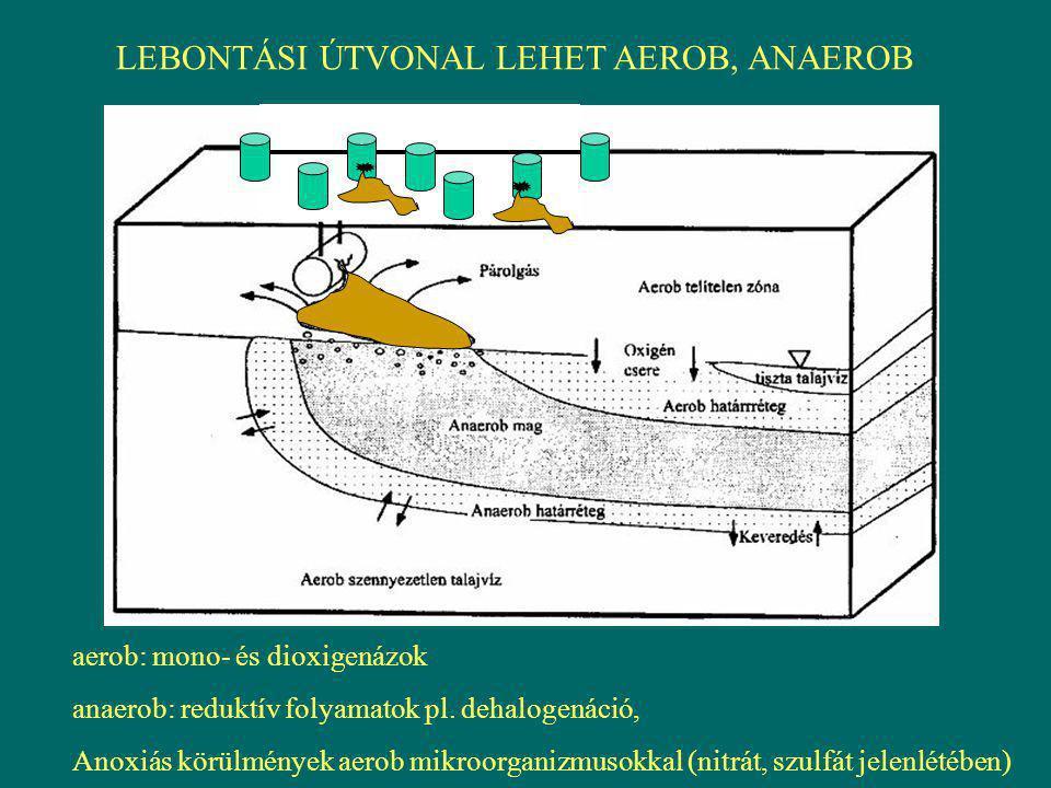 LEBONTÁSI ÚTVONAL LEHET AEROB, ANAEROB aerob: mono- és dioxigenázok anaerob: reduktív folyamatok pl. dehalogenáció, Anoxiás körülmények aerob mikroorg