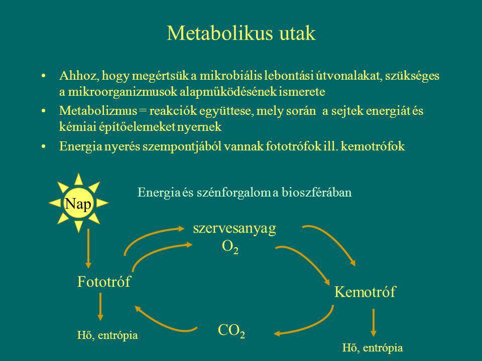 Metabolikus utak Ahhoz, hogy megértsük a mikrobiális lebontási útvonalakat, szükséges a mikroorganizmusok alapműködésének ismerete Metabolizmus = reak