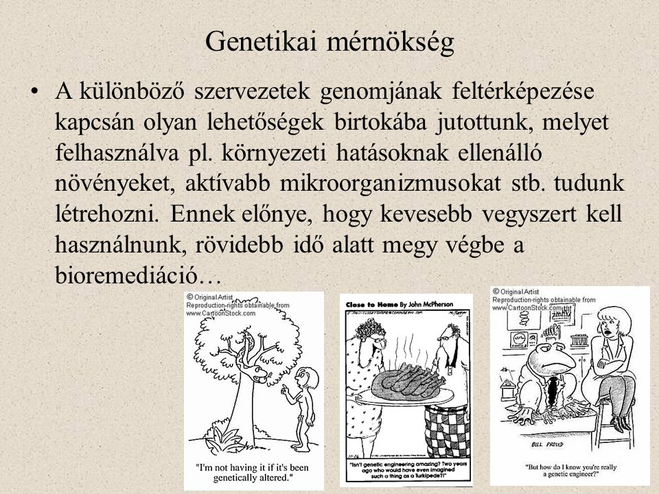 Genetikai mérnökség A különböző szervezetek genomjának feltérképezése kapcsán olyan lehetőségek birtokába jutottunk, melyet felhasználva pl. környezet