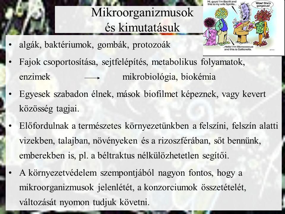 Mikroorganizmusok és kimutatásuk algák, baktériumok, gombák, protozoák Fajok csoportosítása, sejtfelépítés, metabolikus folyamatok, enzimekmikrobiológ