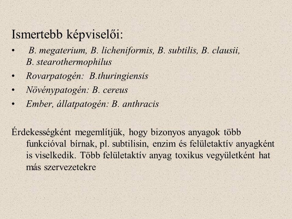 Ismertebb képviselői: B. megaterium, B. licheniformis, B. subtilis, B. clausii, B. stearothermophilus Rovarpatogén: B.thuringiensis Növénypatogén: B.