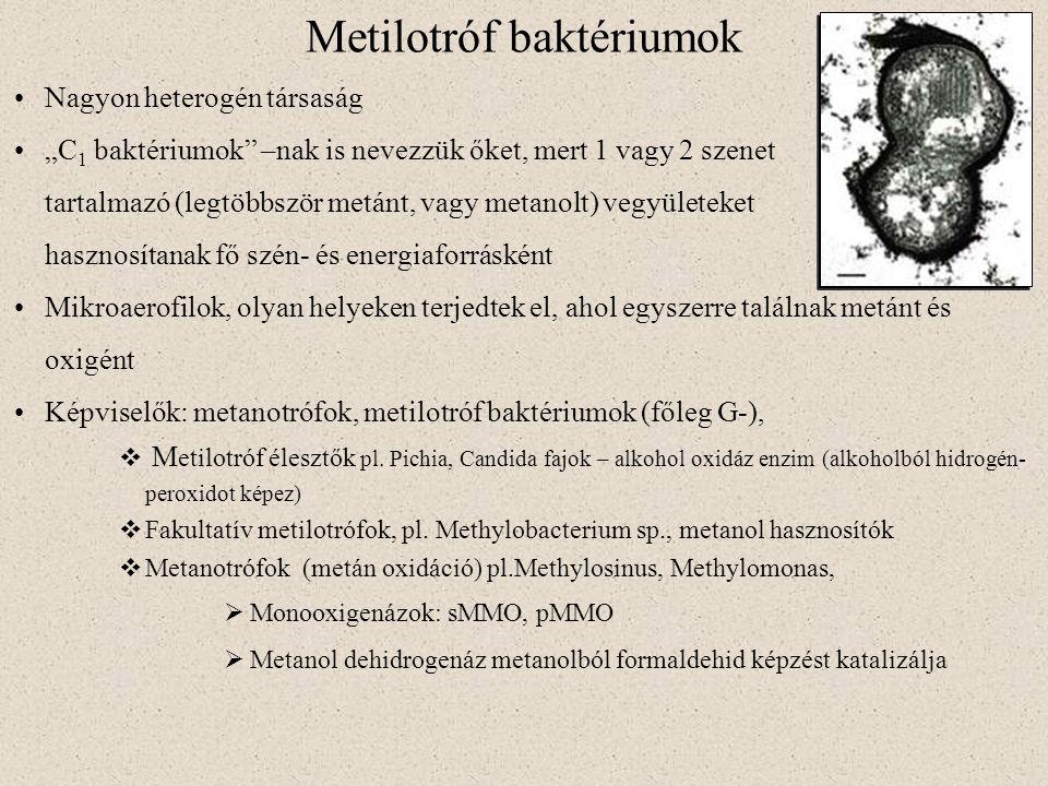 """Metilotróf baktériumok Nagyon heterogén társaság """"C 1 baktériumok"""" –nak is nevezzük őket, mert 1 vagy 2 szenet tartalmazó (legtöbbször metánt, vagy me"""