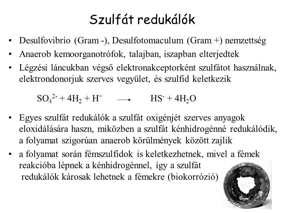 Alkohol termelő mikroorganizmusokban a glükóz átalakulása etanollá glükóz glikolizis 2 piruvát Szentgyörgyi- Krebs ciklus acetaldehid 2 etanol 2 CO 2 NADH NAD + Piruvát dekarboxiláz Alkohol dehidrogenáz