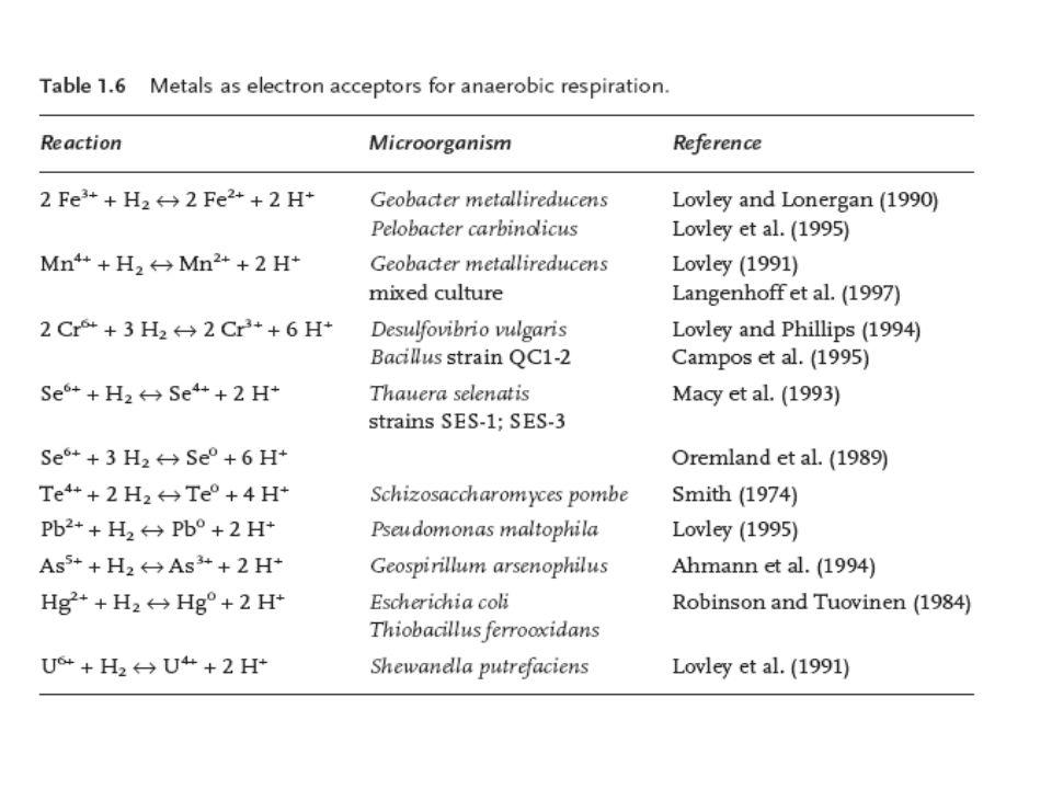 Felfedezésük: lángoló mocsár (Volta) Archaea, obligát anaerobok Előfordulnak metanogén környezetben pl.