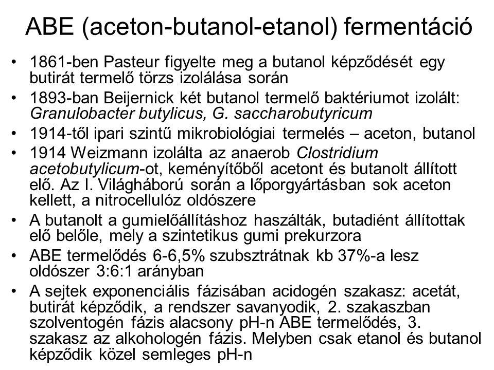 1861-ben Pasteur figyelte meg a butanol képződését egy butirát termelő törzs izolálása során 1893-ban Beijernick két butanol termelő baktériumot izolá