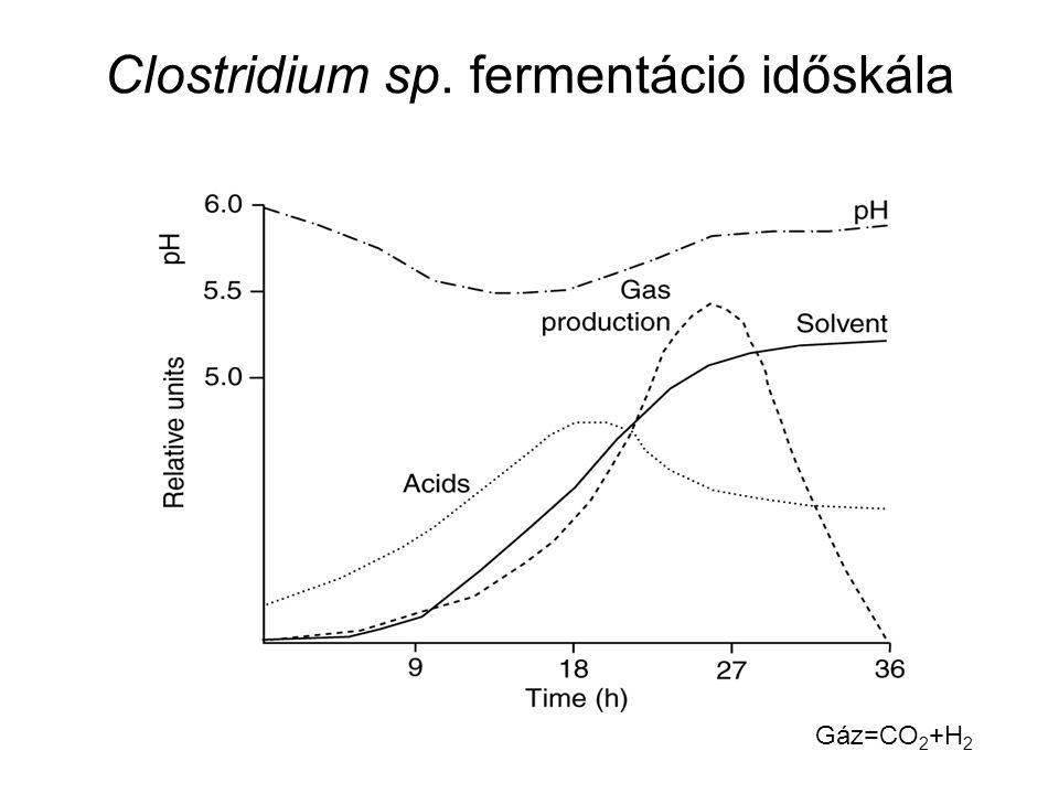 Clostridium sp. fermentáció időskála Gáz=CO 2 +H 2