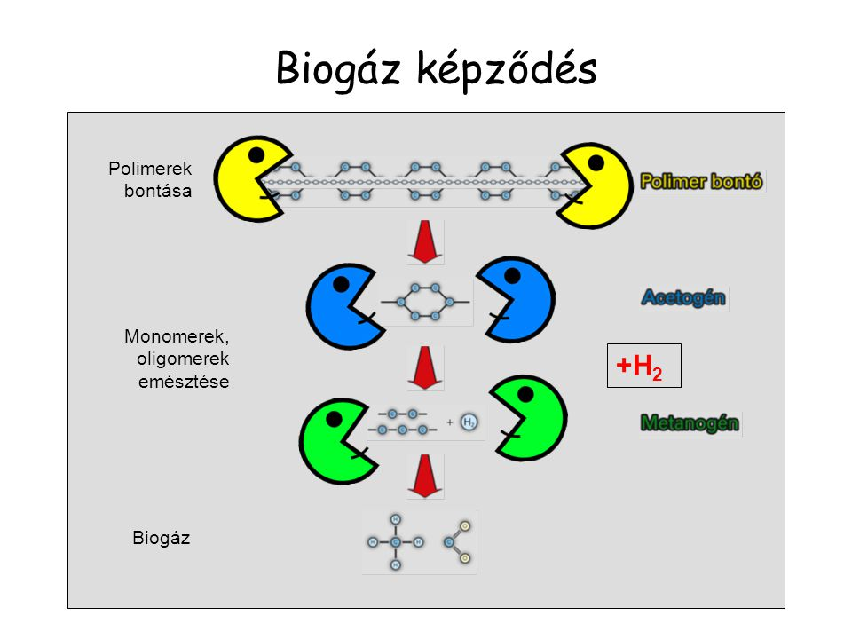 Biogáz képződés Monomerek, oligomerek emésztése Biogáz Polimerek bontása +H 2