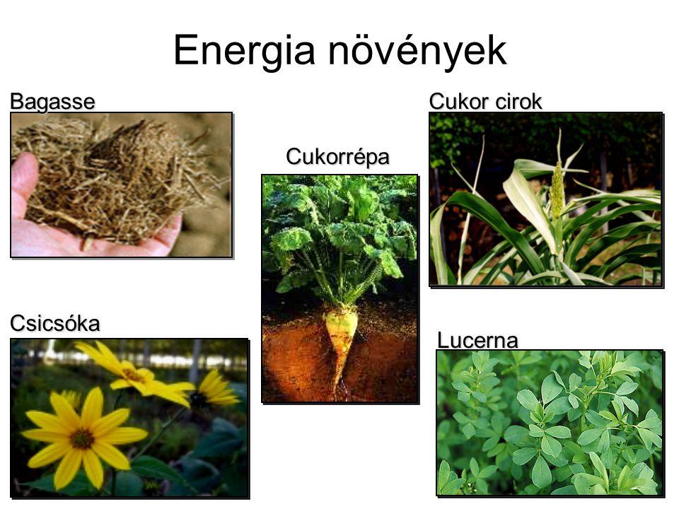 Energia növények Bagasse Cukor cirok Csicsóka Lucerna Cukorrépa