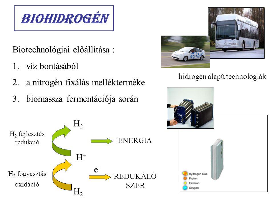 Biohidrogén Biotechnológiai előállítása : 1.víz bontásából 2.a nitrogén fixálás mellékterméke 3.biomassza fermentációja során H+H+ H2H2 H 2 fejlesztés