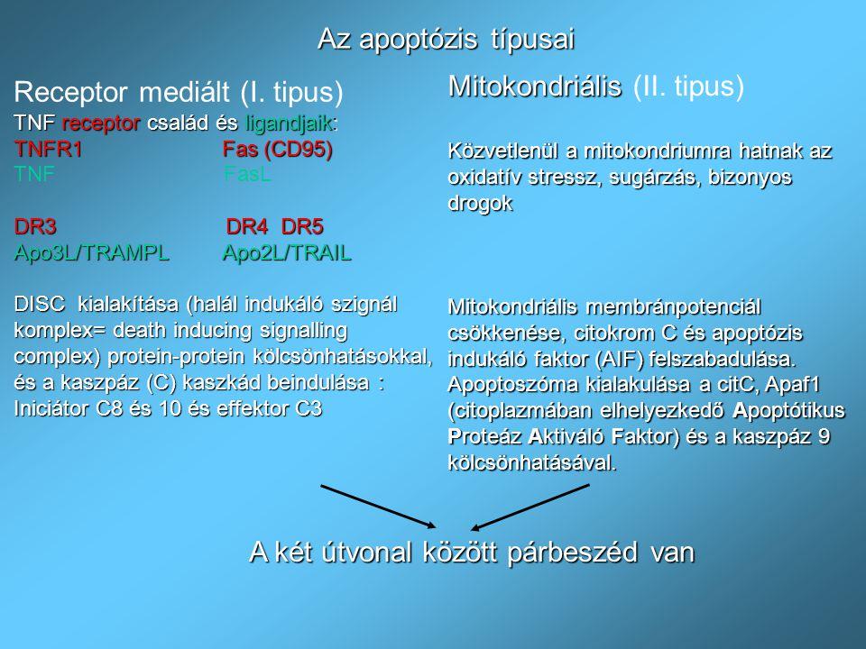 Az apoptózis típusai Receptor mediált (I. tipus) TNF receptor család és ligandjaik: TNFR1 Fas (CD95) TNF FasL DR3 DR4 DR5 Apo3L/TRAMPL Apo2L/TRAIL DIS