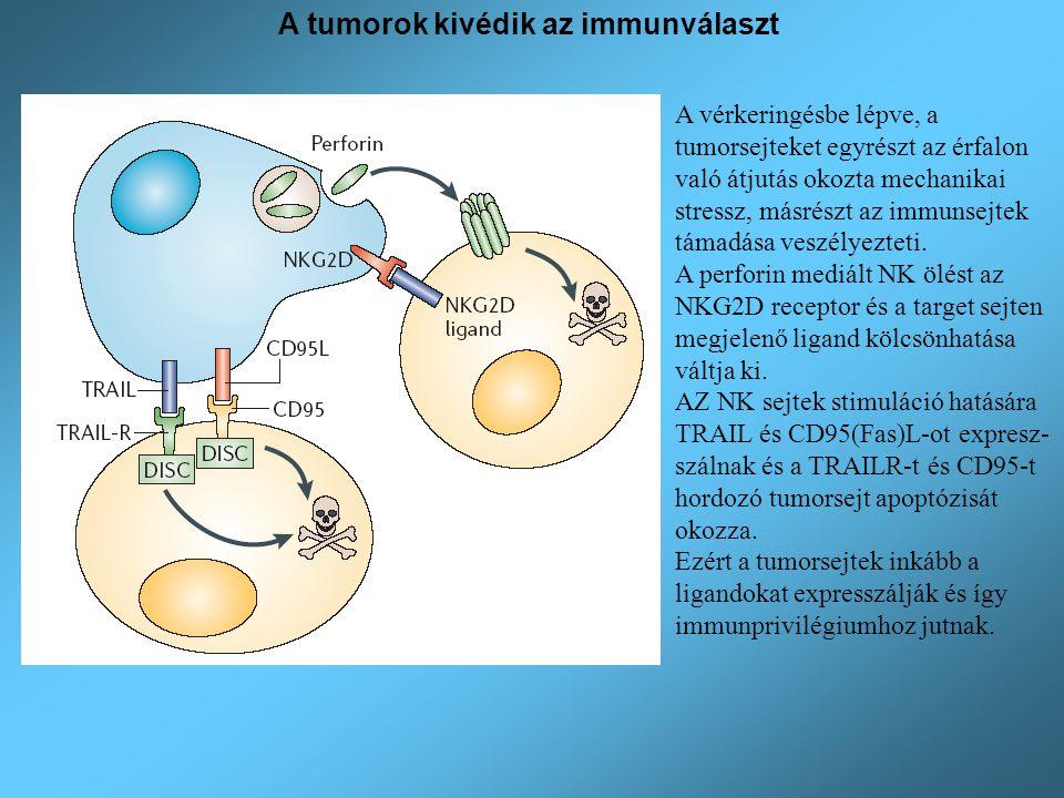 A tumorok kivédik az immunválaszt A vérkeringésbe lépve, a tumorsejteket egyrészt az érfalon való átjutás okozta mechanikai stressz, másrészt az immun