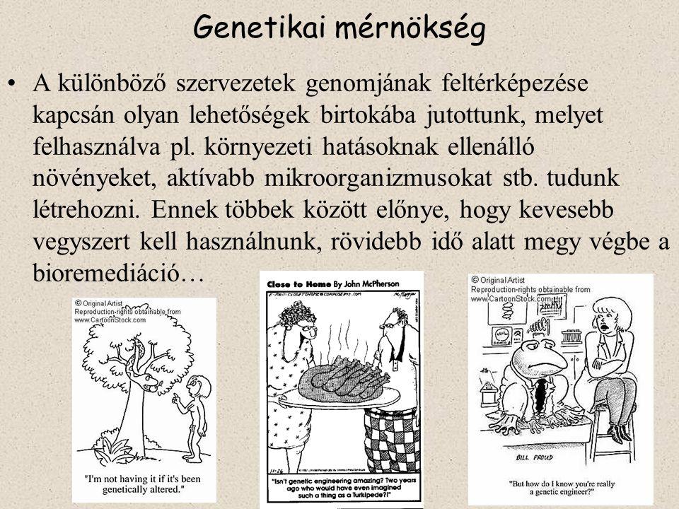 Genetikai mérnökség A különböző szervezetek genomjának feltérképezése kapcsán olyan lehetőségek birtokába jutottunk, melyet felhasználva pl.