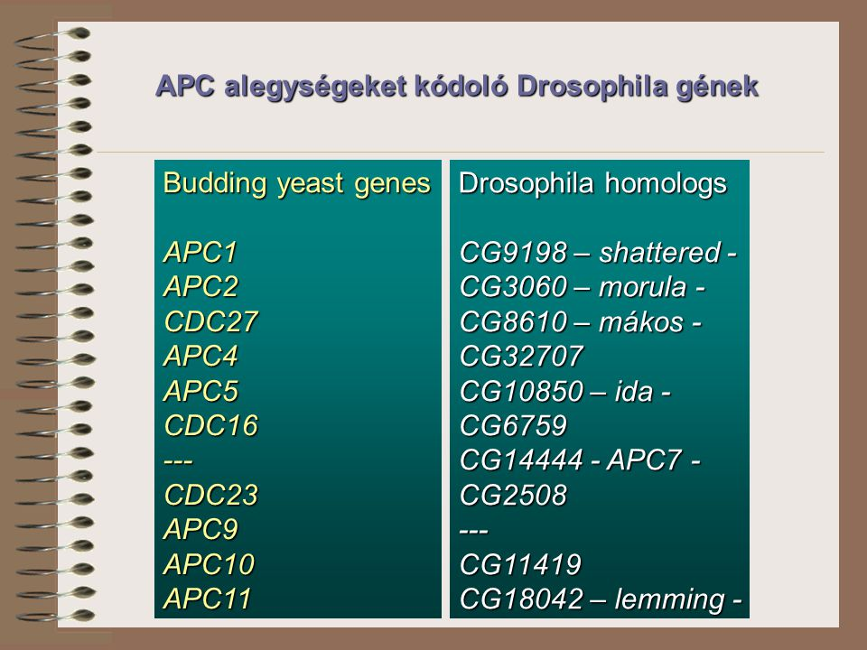 APC alegységeket kódoló Drosophila gének Budding yeast genes APC1APC2CDC27APC4APC5CDC16---CDC23APC9APC10APC11 Drosophila homologs CG9198 – shattered - CG3060 – morula - CG8610 – mákos - CG32707 CG10850 – ida - CG6759 CG14444 - APC7 - CG2508---CG11419 CG18042 – lemming -