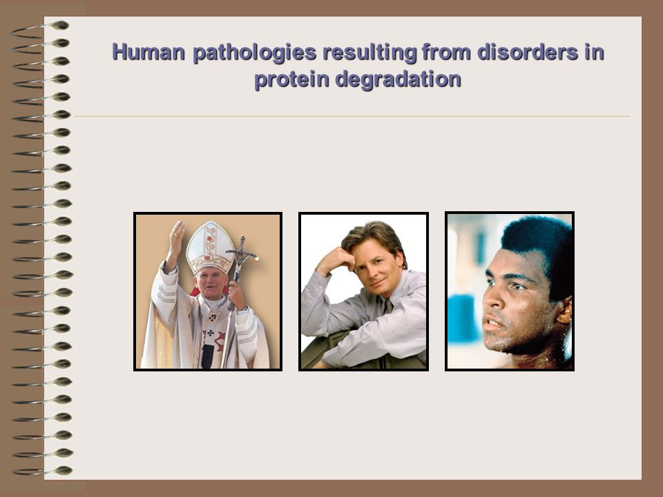Human pathologies resulting from disorders in protein degradation