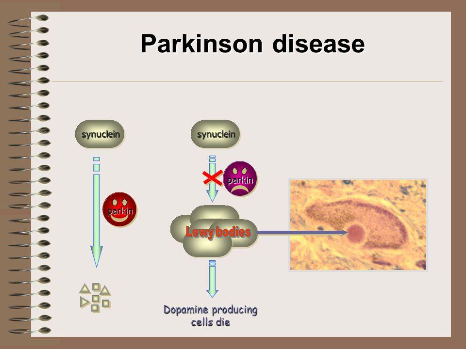 Parkinson disease synucleinsynuclein parkin parkin Dopamine producing cells die