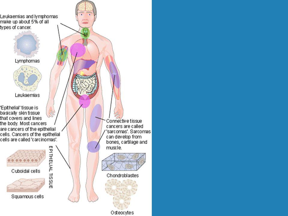 Rákot indukáló nem genetikai tényezők enzimgátló vegyületek (pl.