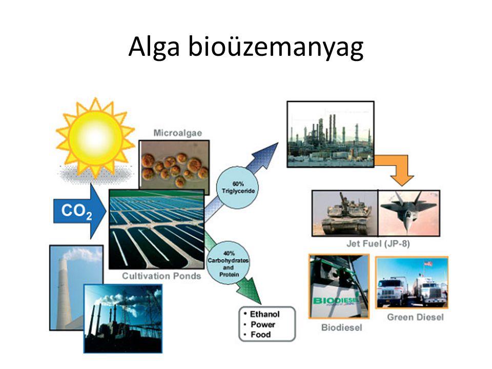 Alga bioüzemanyag