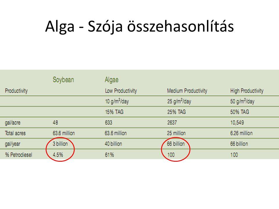Alga - Szója összehasonlítás