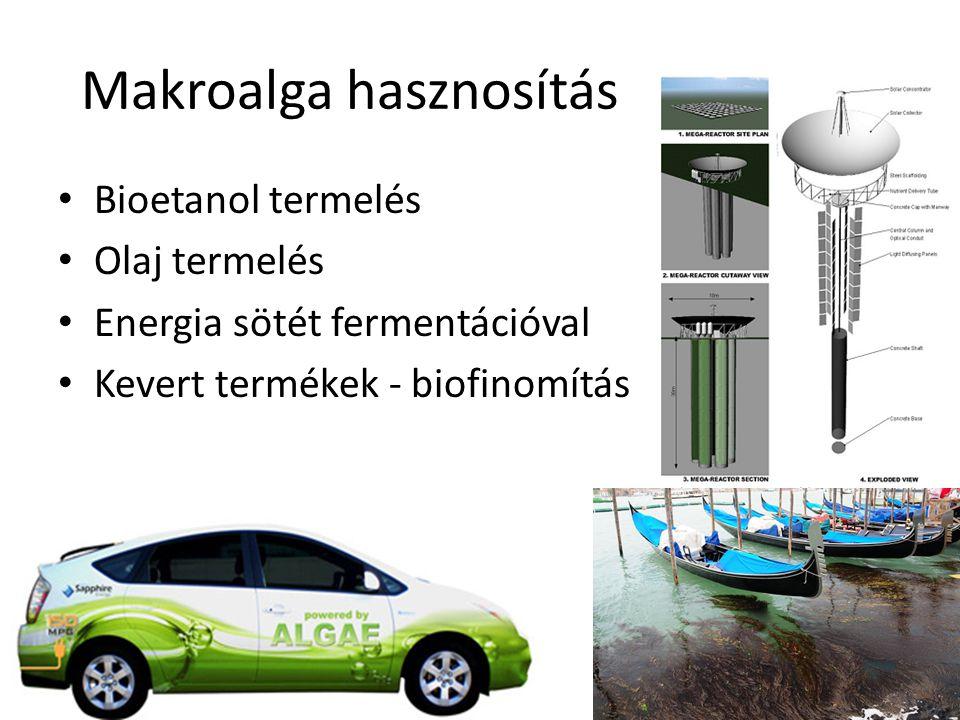 Makroalga hasznosítás Bioetanol termelés Olaj termelés Energia sötét fermentációval Kevert termékek - biofinomítás
