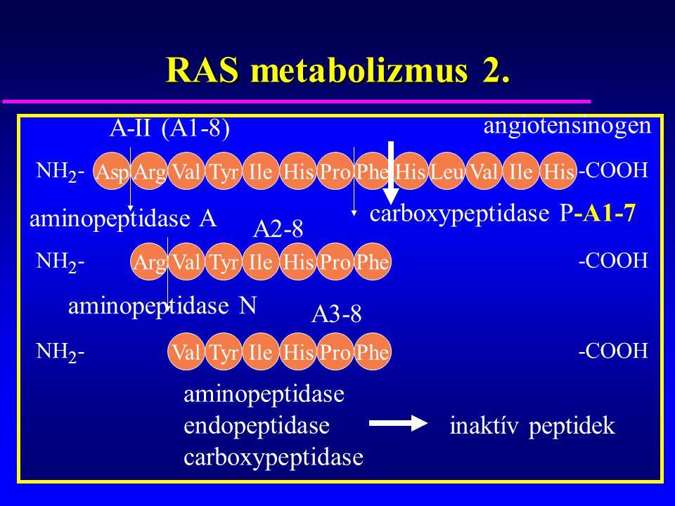 RAS metabolizmus 2. AspArgValTyrIleHisProPheHisLeuValIleHis NH 2 --COOH ArgValTyrIleHisProPhe NH 2 --COOH ValTyrIleHisProPhe NH 2 --COOH angiotensinog