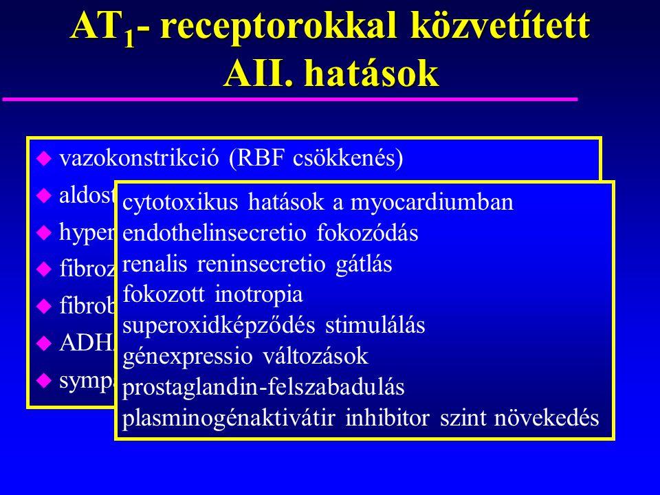 AT 1 - receptorokkal közvetített AII. hatások u vazokonstrikció (RBF csökkenés) u aldosteron szintézis/secretio - folyadék/Na-retenció u hypertrophia
