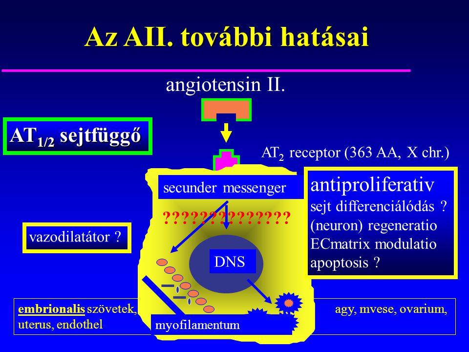 embrionalis szövetek, agy, mvese, ovarium, uterus, endothel Az AII. további hatásai angiotensin II. AT 2 receptor (363 AA, X chr.) secunder messenger