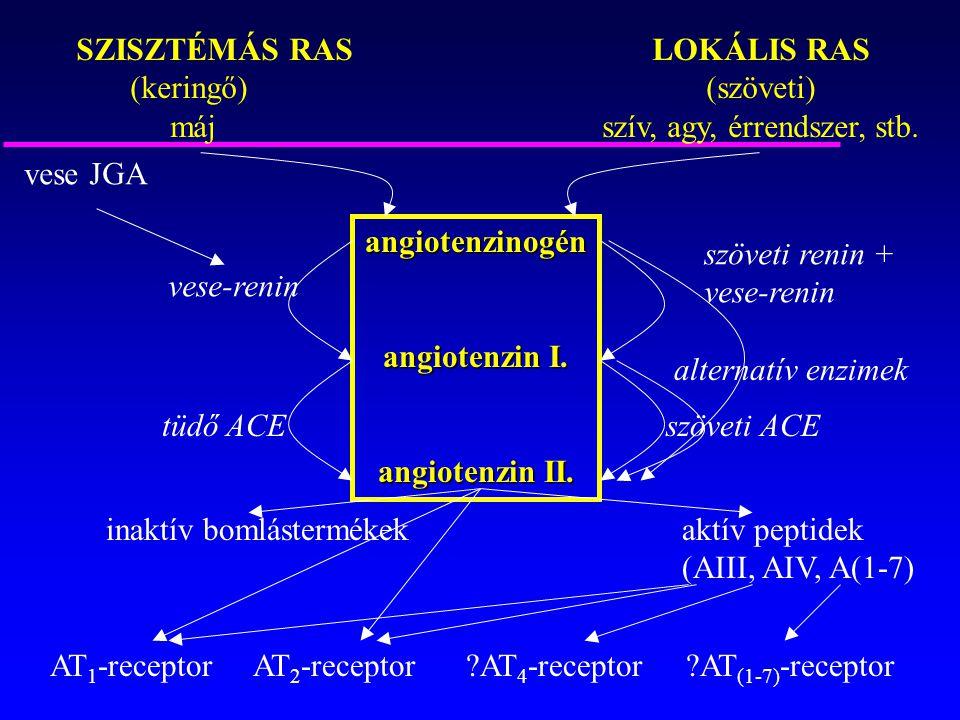 SZISZTÉMÁS RASLOKÁLIS RAS (keringő)(szöveti) májszív, agy, érrendszer, stb. angiotenzinogén angiotenzin I. angiotenzin II. vese JGA vese-renin szöveti