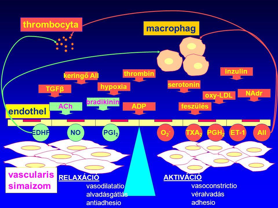 AKTIVÁCIÓ vasoconstrictio véralvadás adhesio ET-1AIITXA 2 PGH 2 O2-O2- EDHFPGI 2 NO endothel vascularis simaizom keringő AII NAdr serotonin feszülésAC