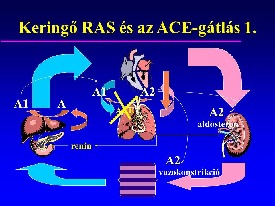 Keringő RAS és az ACE-gátlás 1. AA1 renin ACE vazokonstrikció aldosteron A1A2 A2 A2