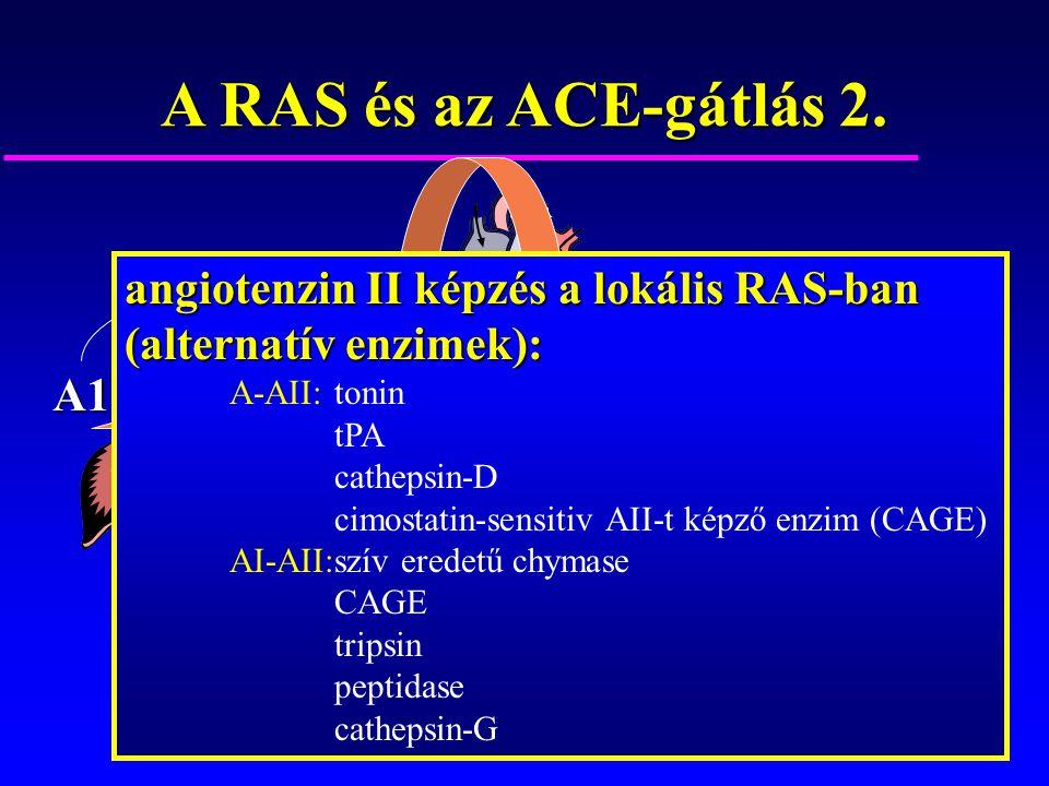 A1 ACE A1A2 A alternatívenzimek angiotenzin II képzés a lokális RAS-ban (alternatív enzimek): A-AII: tonin tPA cathepsin-D cimostatin-sensitiv AII-t k