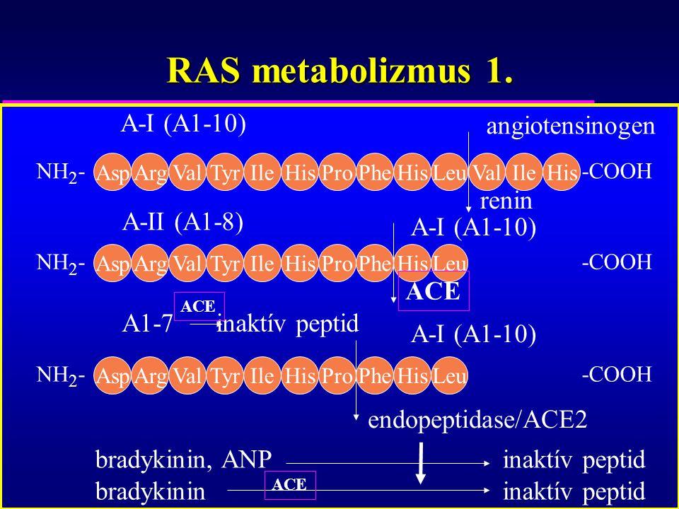 RAS metabolizmus 1. AspArgValTyrIleHisProPheHisLeuValIleHis NH 2 --COOH AspArgValTyrIleHisProPheHisLeu NH 2 --COOH angiotensinogen renin A-I (A1-10) A