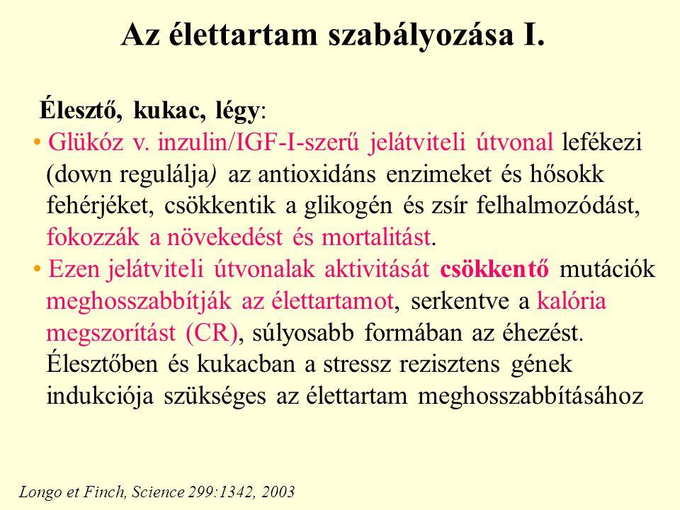 Az élettartam szabályozása I.Élesztő, kukac, légy: Glükóz v.