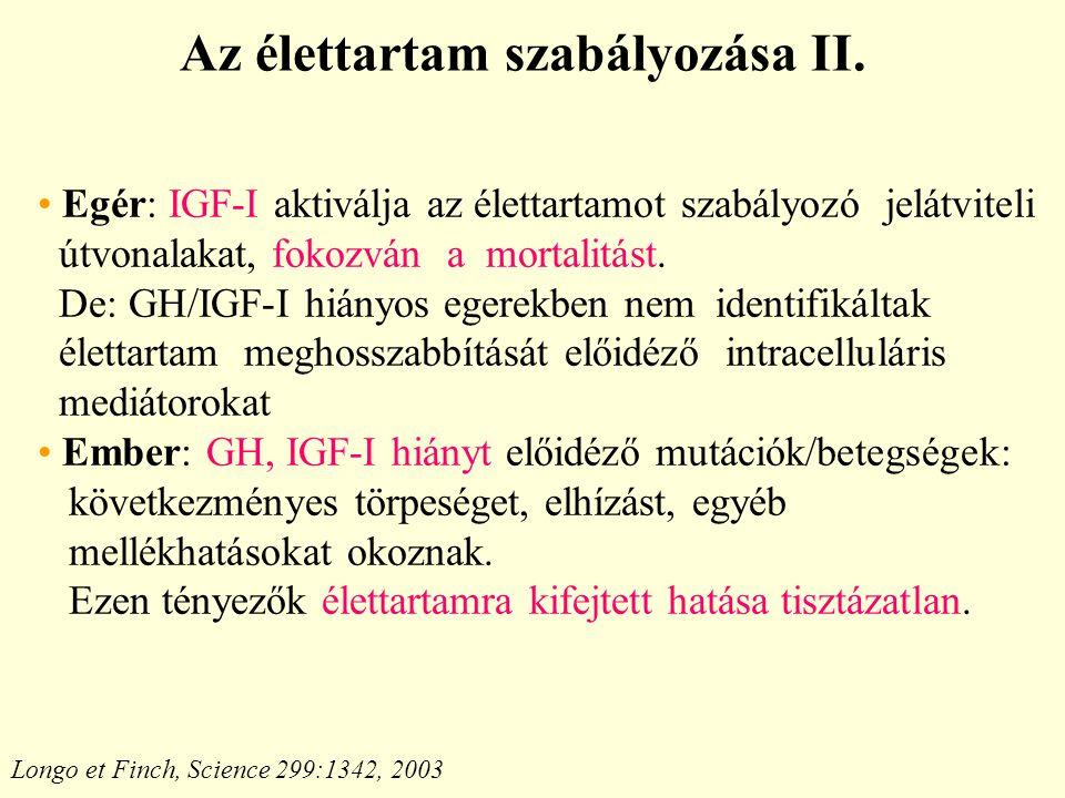 Az élettartam szabályozása II.