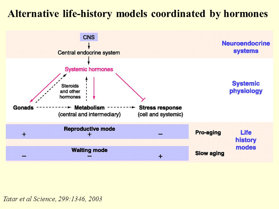 Tatar et al Science, 299:1346, 2003 Alternative life-history models coordinated by hormones