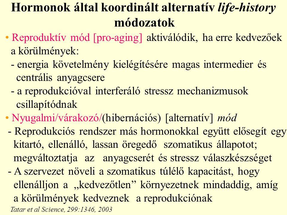 """Hormonok által koordinált alternatív life-history módozatok Reproduktív mód [pro-aging] aktiválódik, ha erre kedvezőek a körülmények: - energia követelmény kielégítésére magas intermedier és centrális anyagcsere - a reprodukcióval interferáló stressz mechanizmusok csillapítódnak Nyugalmi/várakozó/(hibernációs) [alternatív] mód - Reprodukciós rendszer más hormonokkal együtt elősegít egy kitartó, ellenálló, lassan öregedő szomatikus állapotot; megváltoztatja az anyagcserét és stressz válaszkészséget - A szervezet növeli a szomatikus túlélő kapacitást, hogy ellenálljon a """"kedvezőtlen környezetnek mindaddig, amíg a körülmények kedveznek a reprodukciónak Tatar et al Science, 299:1346, 2003"""