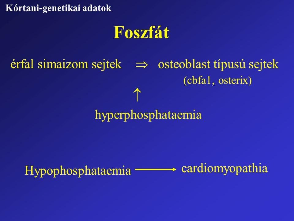 Foszfát Kórtani-genetikai adatok érfal simaizom sejtek  osteoblast típusú sejtek (cbfa1, osterix)  hyperphosphataemia Hypophosphataemia cardiomyopat