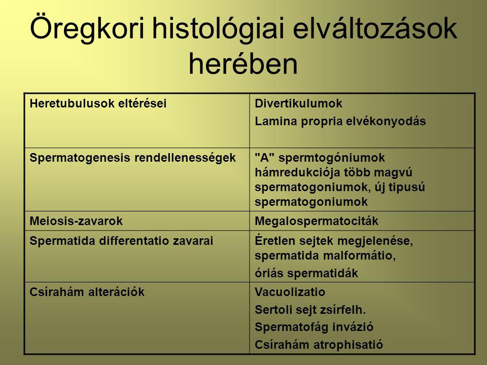 Öregkori histológiai elváltozások herében Heretubulusok eltéréseiDivertikulumok Lamina propria elvékonyodás Spermatogenesis rendellenességek A spermtogóniumok hámredukciója több magvú spermatogoniumok, új tipusú spermatogoniumok Meiosis-zavarokMegalospermatociták Spermatida differentatio zavaraiÉretlen sejtek megjelenése, spermatida malformátio, óriás spermatidák Csírahám alterációkVacuolizatio Sertoli sejt zsírfelh.