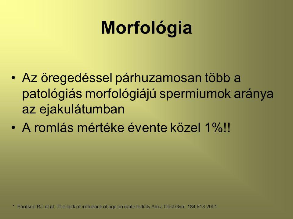 Morfológia Az öregedéssel párhuzamosan több a patológiás morfológiájú spermiumok aránya az ejakulátumban A romlás mértéke évente közel 1%!.