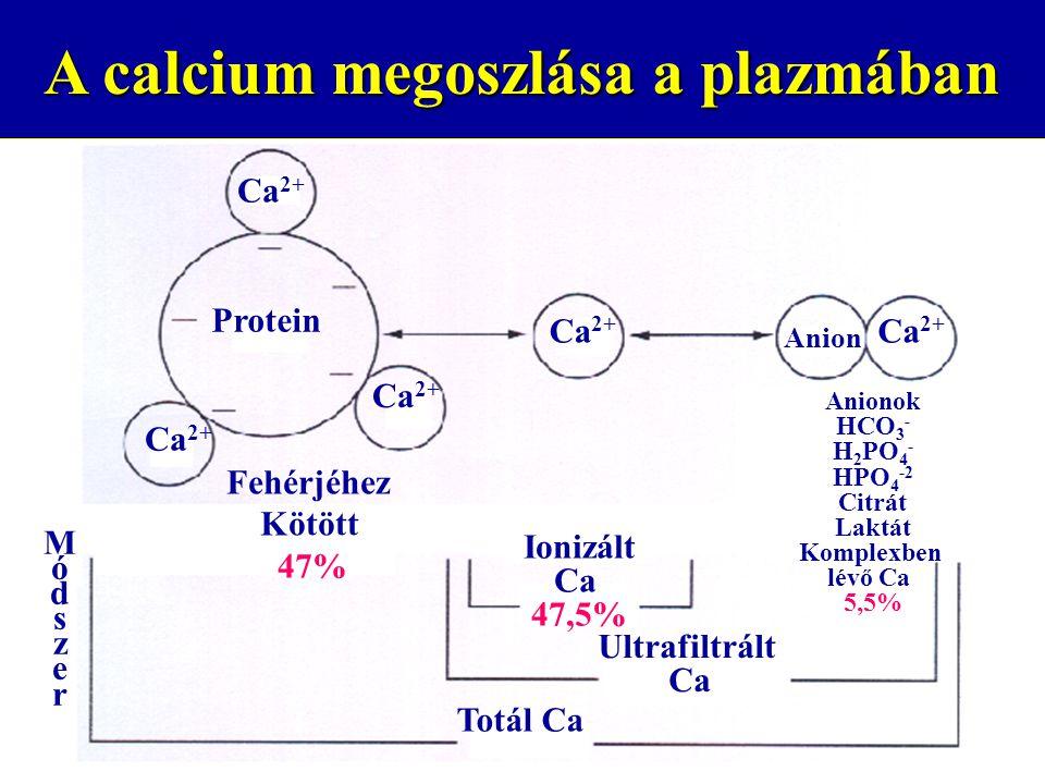 A calcium megoszlása a plazmában Protein Ca 2+ Anion Ionizált Ca 47,5% Ultrafiltrált Ca Totál Ca Fehérjéhez Kötött 47% MódszerMódszer Anionok HCO 3 - H 2 PO 4 - HPO 4 -2 Citrát Laktát Komplexben lévő Ca 5,5%