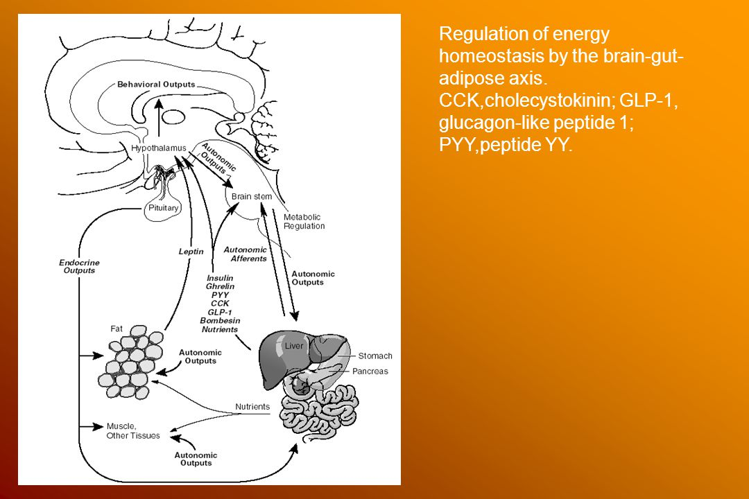 Regulation of energy homeostasis by the brain-gut- adipose axis. CCK,cholecystokinin; GLP-1, glucagon-like peptide 1; PYY,peptide YY.