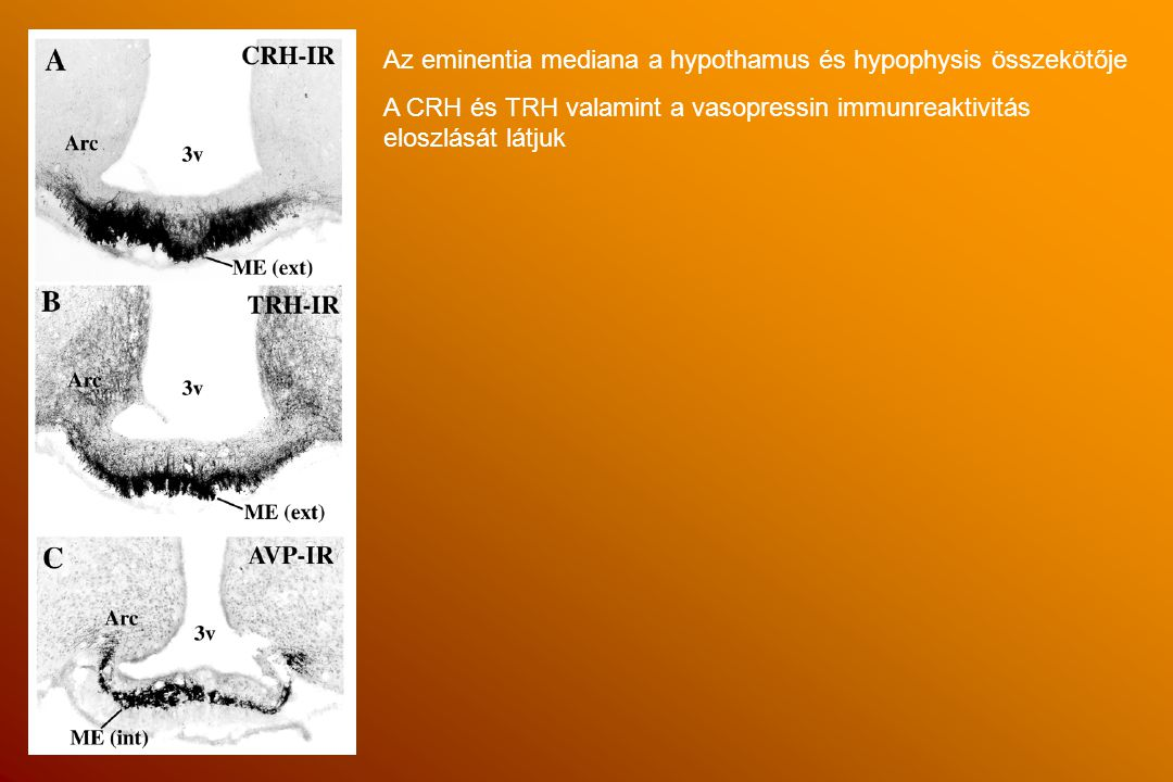 Regulation of the hypothalamic-pituitary- adrenal axis.