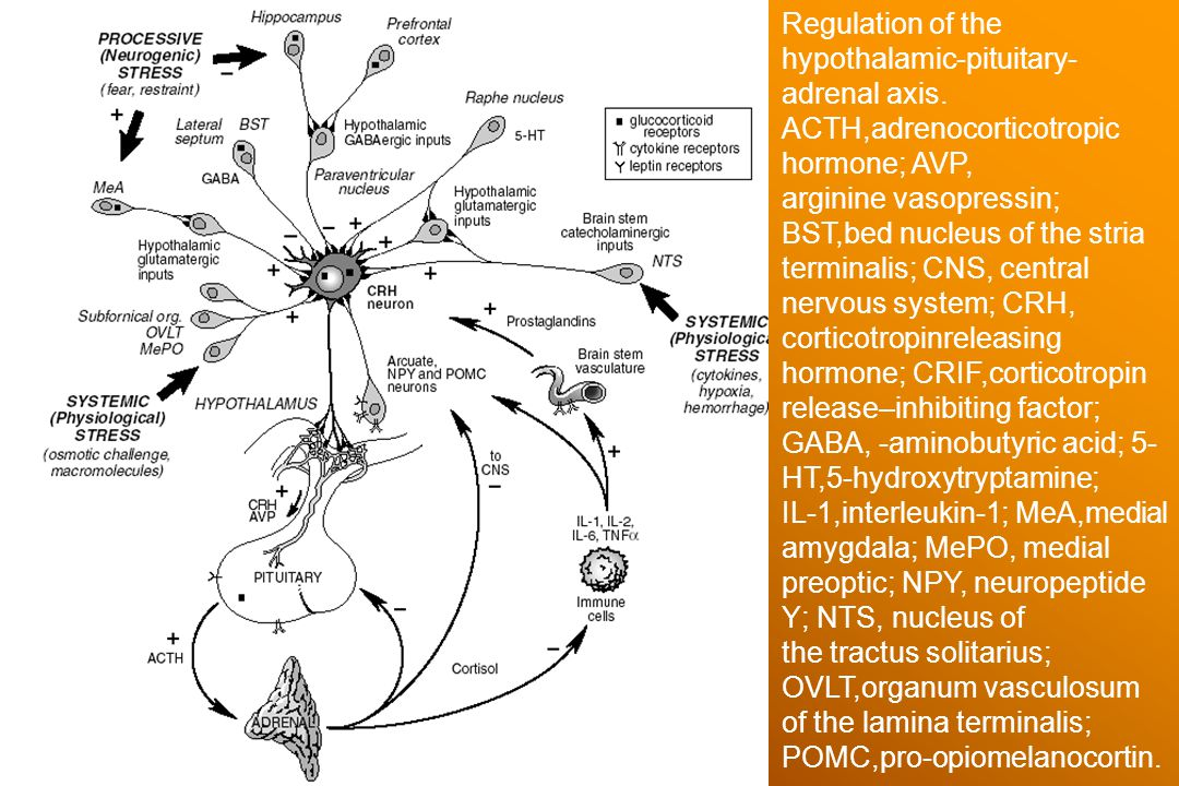 Regulation of the hypothalamic-pituitary- adrenal axis. ACTH,adrenocorticotropic hormone; AVP, arginine vasopressin; BST,bed nucleus of the stria term