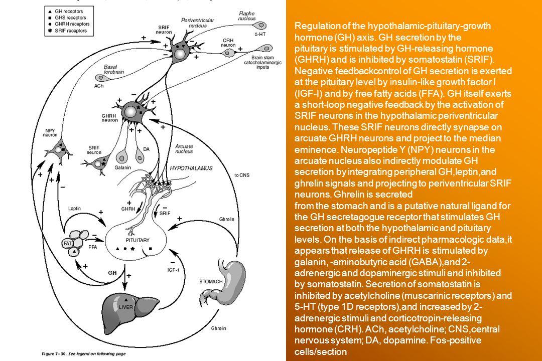 Hypothalamus laesiók 25-50 éves korban Táplálkozási: Wernicke pszichózis (alkoholistákon) Tumorok: glioma, lymphoma, meningeoma, craniopharyngeoma, hypophysis tumorok, angioma, plasmocytoma, colloid cysta, ependymoma, sarcoma, histiocytosis X Gyulladásos: carcoidosis, tbc, virusos encephalitis Vascularis: subarachnoidalis vérzés, aneurysma, arteriovenosus shunt Besugárzás (hypophysis tumor)