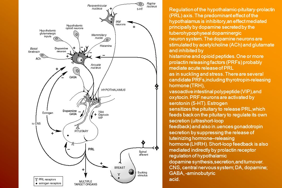 Hypothalamus laesiók 50 év felett Táplálkozási: Wernicke pszichózis (alkoholistákon) Tumorok: sarcoma, glioblastoma, lymphoma, meningeoma, colloid cysta, ependymoma, hypophysis tumor Vascularis: ictus, subarachnoidalis vérzés, hypophysis apoplexia Gyulladásos: encephalitis, sarcoidosis, meningitis Besugárzás: nasopharyngealis carcinoma miatt